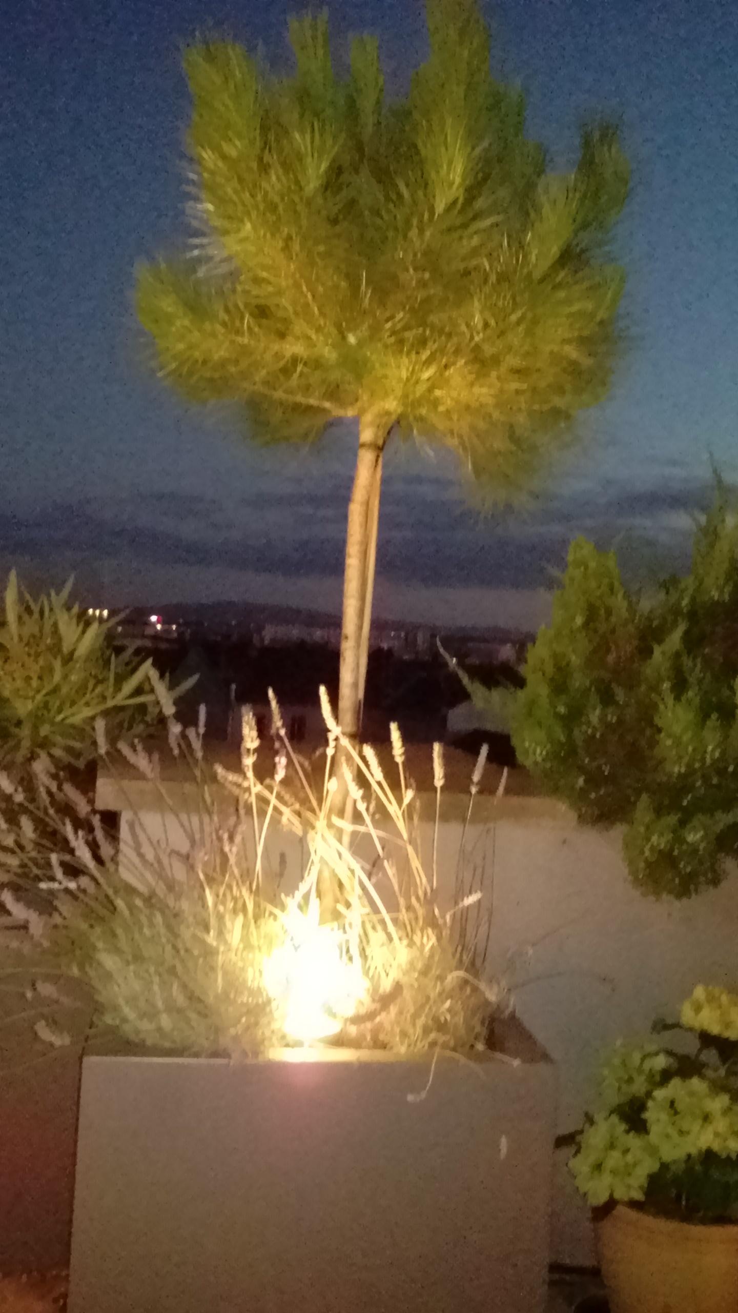 Am nagement de terrasse au dernier tage lyon - Quelle plante mettre sur une terrasse ...